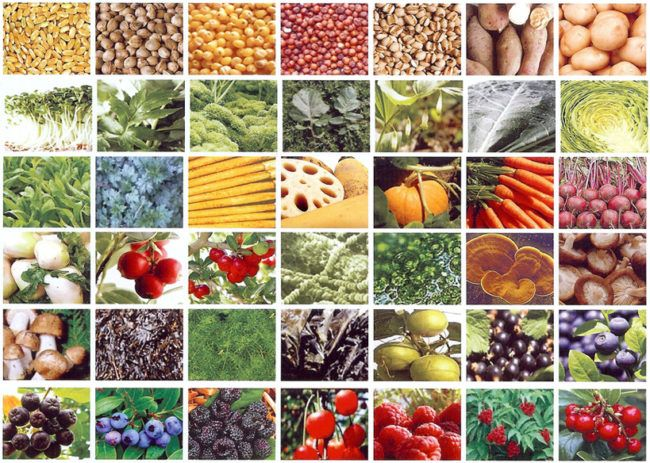Foods to avoid and foods to consume – Part 2